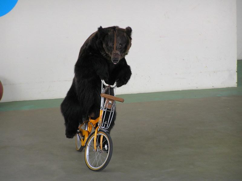 自転車に乗るクマ.jpg